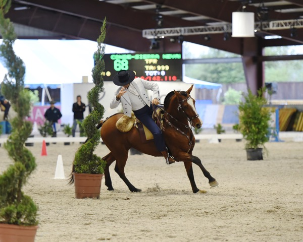 2015-horse-rider-dsc_8346